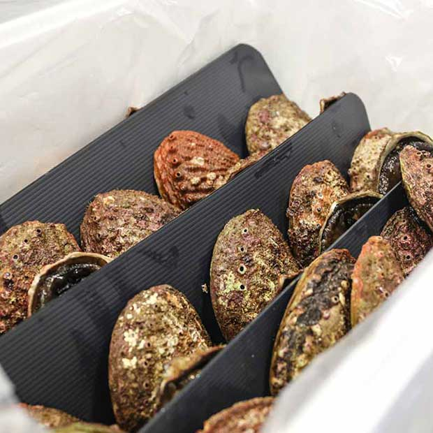 Live abalone packed in box