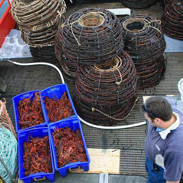 Lobster on deck of boat